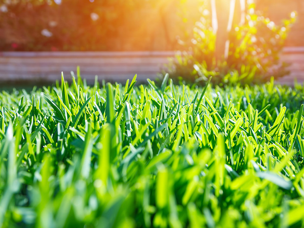 Keep Your Lawn Looking its Best Year-Round
